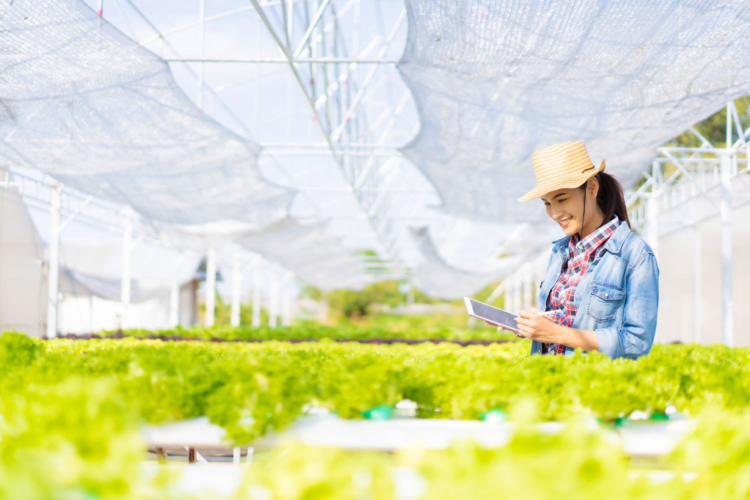 Farmers are recording data on tablets at Hydroponic vegetables salad farm.